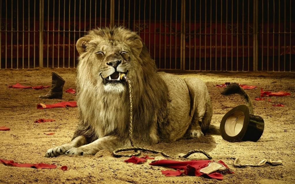 animal-lion-tamer-wallpapers-background-winter-194789
