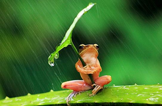 quintessential-frog-with-umbrella
